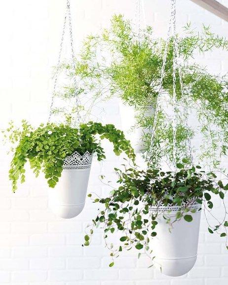 5 Maneras De Decorar Con Plantas 3dinteriores