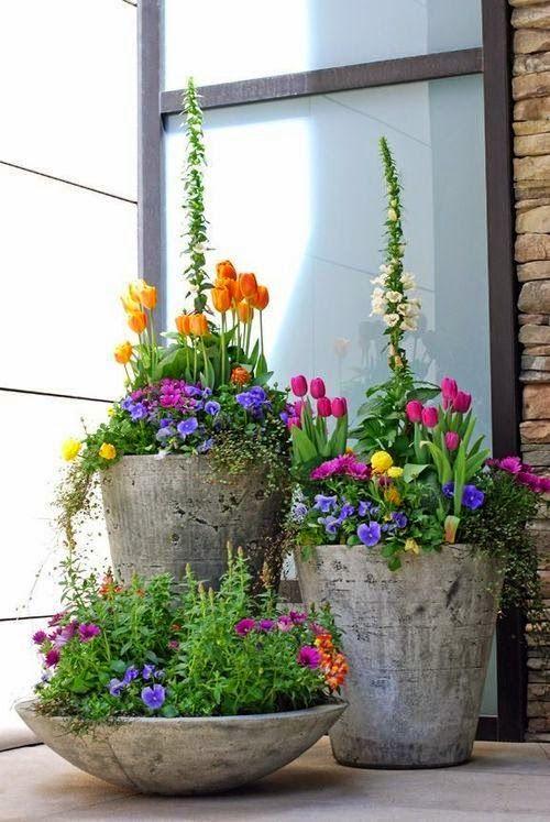 plantas agrupadas